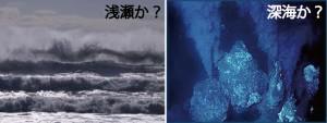 浅瀬か 深海か